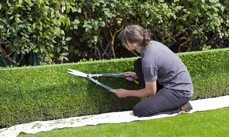 box-hedge-topiary-869073_1280