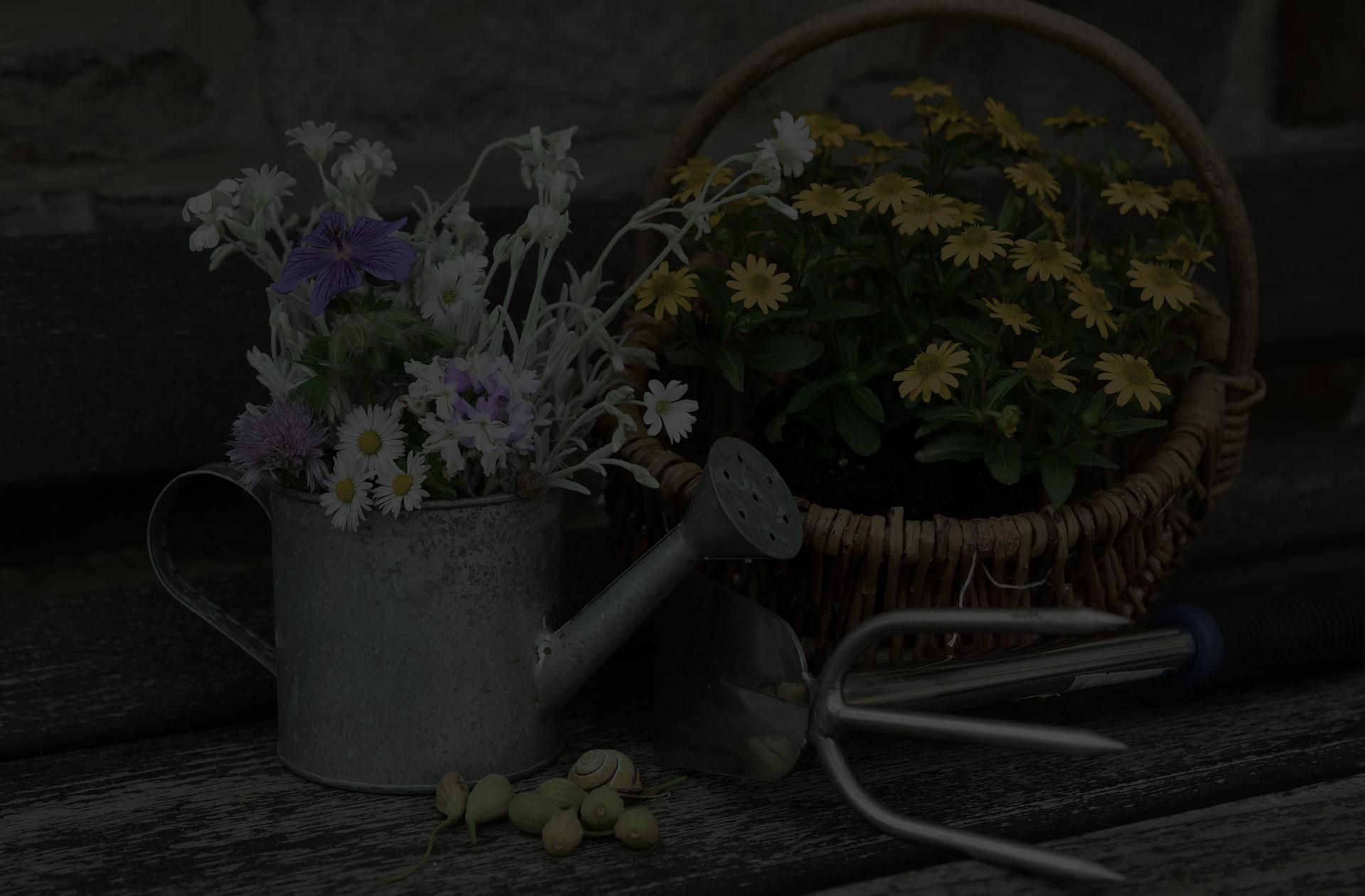 flowers-779317_1920-dark